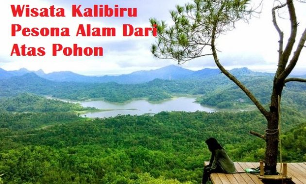 Wisata Kalibiru Pesona Alam Dari Atas Pohon