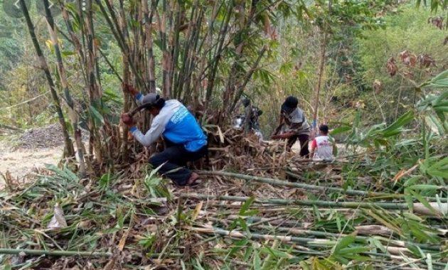 Cara Membunuh Pohon Bambu Tanpa Ditebang