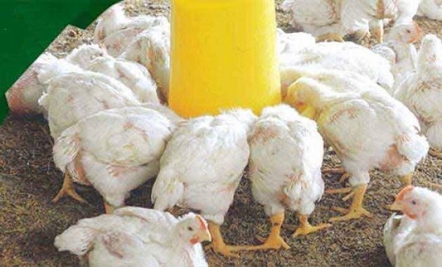Harga Pakan Ayam Broiler BR 1 dan BR 2