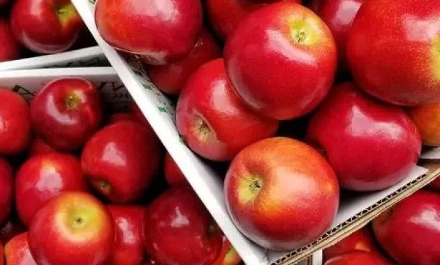 kebaikan apel merah